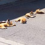 外国人は猫島に興味を持っているか?【動物とふれあう体験のポイント】